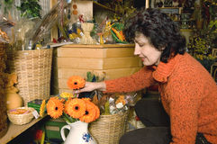 Florist. Choosing gerber daisy in her shop with flower Stock Photo