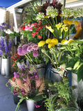Florist. Flowers in different colors royalty free stock photo