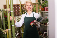Florist in apron holding tools Royalty Free Stock Photo