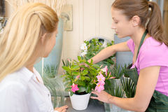 Florist arranging flowers in pot Stock Image