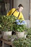 Florist arranging fresh flowers royalty free stock photography