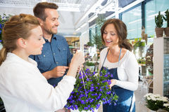 Florist Assisting Couple In Buying Purple Flower Stock Photography