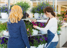 Florist Assisting Customer In Buying Plants At Stock Image