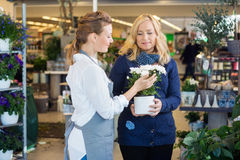 Florist Assisting Female Customer In Buying Flower Royalty Free Stock Photos