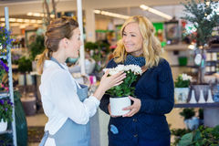 Florist Assisting Happy Female Customer In Buying. Flower plants at shop stock photos