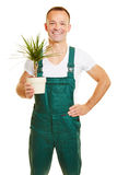 Florist with a Beaucarnea plant Royalty Free Stock Image