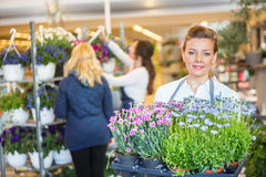 Florist Carrying Flower Plants With Colleague Stock Photos