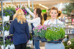 Florist Carrying Flower Plants With Colleague Stock Image