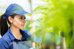 Florist checking flowers Royalty Free Stock Images