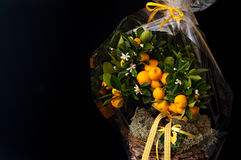 Florist composition with oranges Royalty Free Stock Image