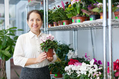 Florist with Cyclamen Royalty Free Stock Photography