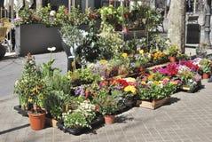 Florist display in Barcelona. Spain Royalty Free Stock Image