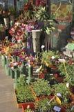Florist display in Barcelona. Spain Stock Photos
