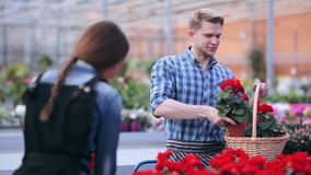 Florist with flower basket at greenhouse stock footage