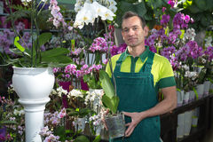 Florist in flower shop posing with orchid Stock Photography