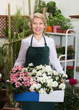 Florist with fresh flowers Royalty Free Stock Images