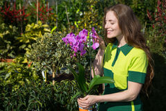 Florist or gardener smelling at flower Royalty Free Stock Images
