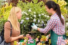 Florist geben den Kundenfrauenanlagen Rat Stockfotos