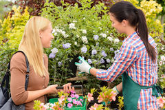 Florist give advice to customer woman plants Stock Photos