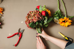 Florist hands cutting rose with garden scissors Royalty Free Stock Photo
