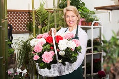 Florist having a basket with hydrangea Royalty Free Stock Image