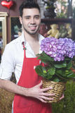 Florist Holding Hydrangea Flower Plant In Shop Stock Image