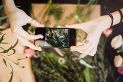 Florist holding smartphone and taking photos of flower on table. Top view of hands of young woman florist holding smartphone and taking photos of flower on table Royalty Free Stock Photo