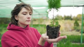 Florist inspects the plant. Control and verification of seedlings. Biologist studies the root of an evergreen seedling