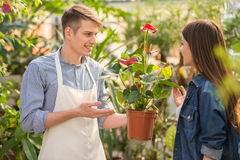 Florist. Male florist helping young female choosing the right flower Royalty Free Stock Photo