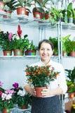 Florist mit Calamondin t am Blumenspeicher Lizenzfreie Stockfotografie