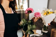Florist in a pink t-shirt and black apron holds in her hands pink chrysanthemums stock photography