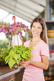 Florist with plant in nursery shop Royalty Free Stock Image