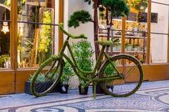 Florist`s Mossy Green Bike