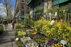 Florist's Shop, Paris, France. Colourful Spring plants for sale outside florist's shop along the Seine Royalty Free Stock Photos