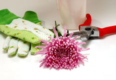Florist's tools and flower Stock Photo