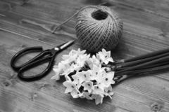 Florist scissors mit weißen Narzissen und Ball der Schnur stockfotografie