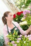 Florist searching a flower. Apron royalty free stock photo
