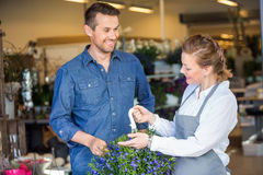 Florist Showing Flower Plant To Customer In Shop Stock Photos
