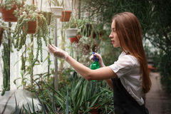 Florist take care of home flowers in greenhouse Royalty Free Stock Photography