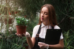 Florist take care of home flowers in greenhouse Stock Photography