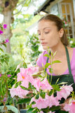 Florist tending to plants Stock Photos