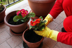 Florist transplant flowers stock photo