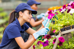 Florist trimming flowers Royalty Free Stock Images