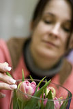 Florist and tulips. A woman arranging some tulips in a glass vase. Wedding planner Stock Image