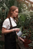 Florist with watering can in greenhouse Stock Photo