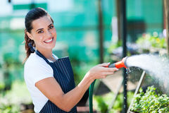 Florist watering flowers Stock Images