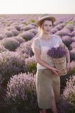 Florist with wicker basket with lavender in her hands looks for the best fresh flowers in the fields stock photos