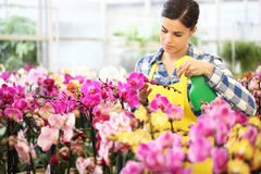 Florist Woman hands with sprayer, spraying on flowers, take care Stock Image