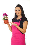 Florist woman offering cyclamen for sale Royalty Free Stock Image