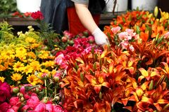 Florist Royalty Free Stock Photos